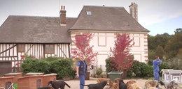 Makabra! Tysiąc maltretowanych psów straci dom!