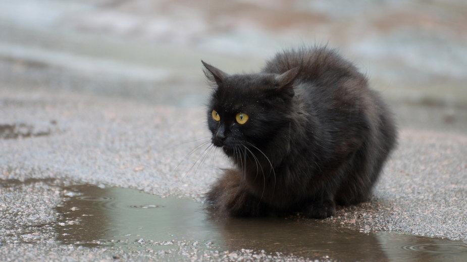 Czy pogoda wpływa na kocie nastroje?
