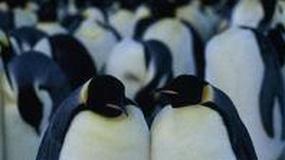"""""""Marsz pingwinów"""" na oscarowej liście"""