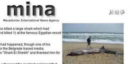 Pijany Serb zabił rekina w Egipcie? Skoczył mu na łeb