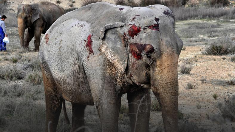 epa06642080_2 - epaselect SPAIN ANIMALS ACCIDENT (A lorry with elephants overturns in Albacete)