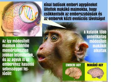 majom helyszíni találkozón