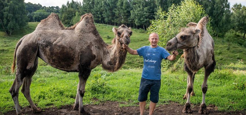 """""""Beduin"""" spod Olkusza. Pan Kazimierz wyhodował sobie osiem garbów i się cieszy"""