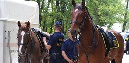 Ile kosztują konie straży miejskiej? Padniecie!