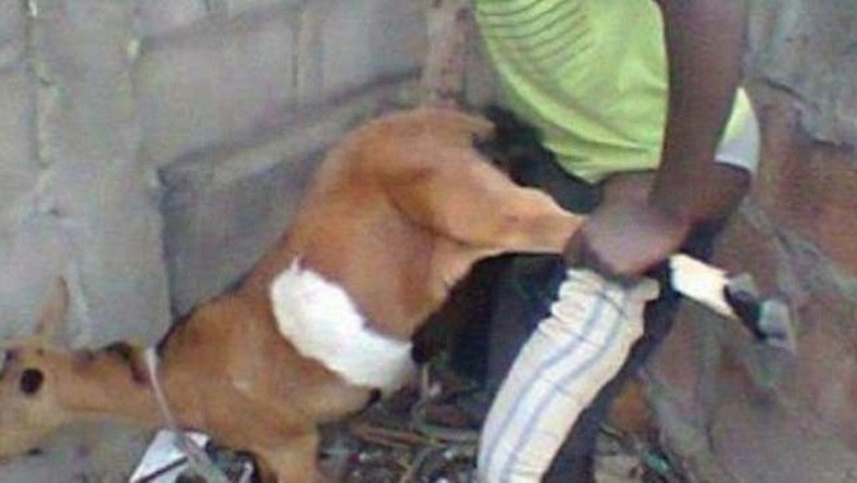 Image result for Man caught having sex with an animal in Nigeria