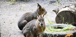 Stęsknione zwierzaki czekają na gości! Otwarcie śląskiego zoo