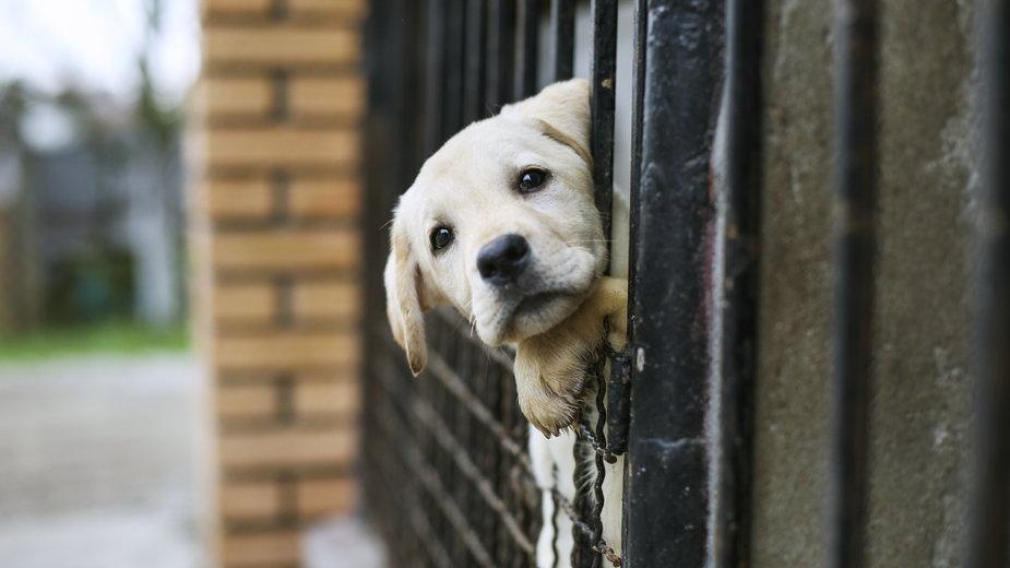 Piątka dla zwierząt. Bój o rasowe psy i koty