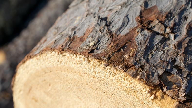 Zielona Góra: za CRS wycinają drzewa pod budowę sklepu meblowego