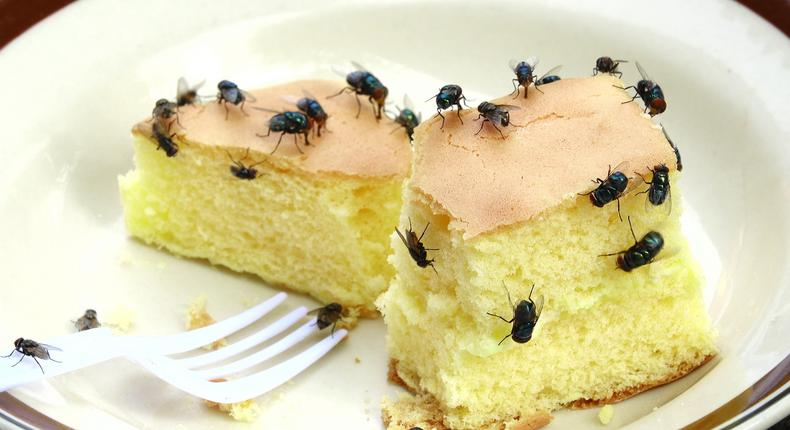 Houseflies(nowthisnews)