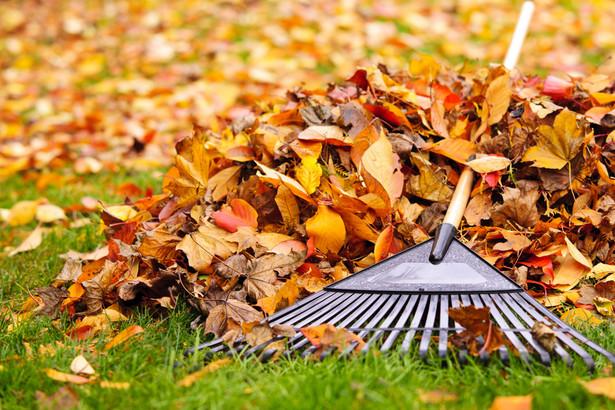 Nawet jeżeli mieszkaniec będzie mógł spalić liście, możliwe, że i tak zostanie ukarany.