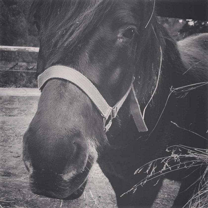 Warka i Pedro pomagały chorym dzieciom. Konie umierały w męczarniach. Kto chciał ich śmierci?