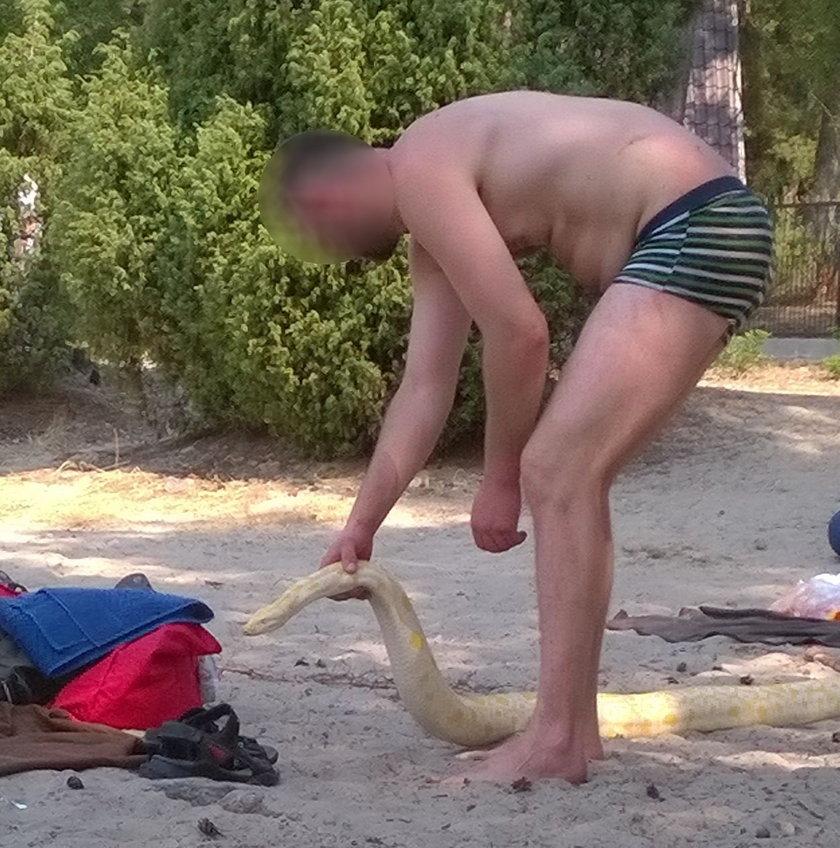 Pyton na plaży