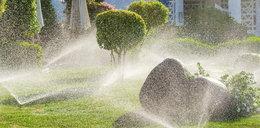 Jak oszczędzać wodę w ogrodzie? Triki, które musisz znać!