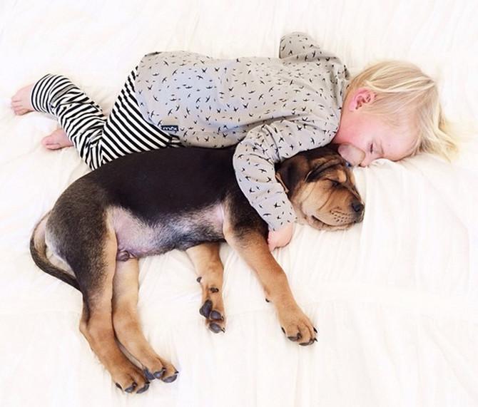 Trenutno ne postoje dokazi da životinje-pratioci i kućni ljubimci poput pasa i mačaka mogu biti zaraženi novim korona virusom