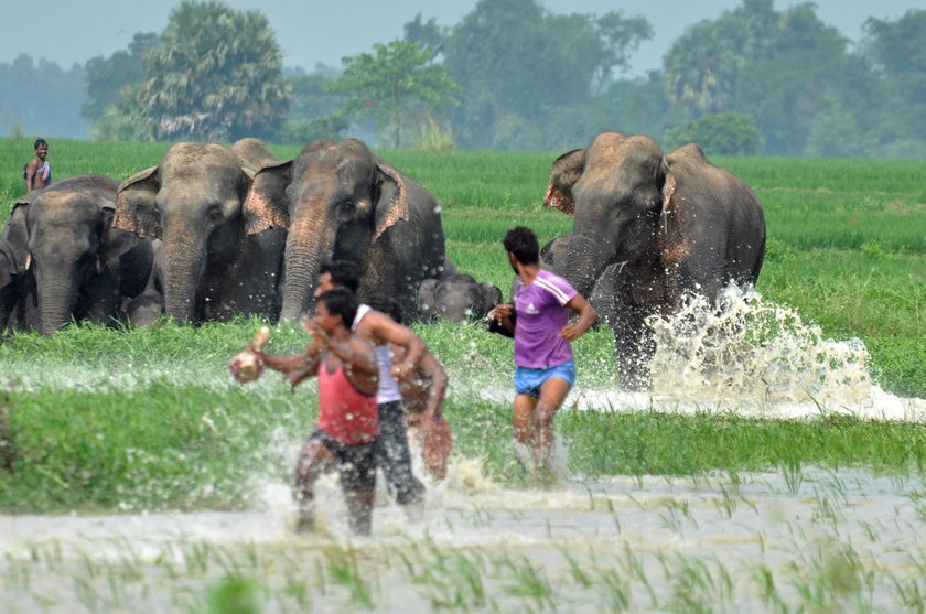 Smutny los słoniątka i jego mamy. To zdjęcie łamie serce