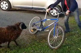 YT_Ovan_vs_Bicikl_vesti_blic_safe