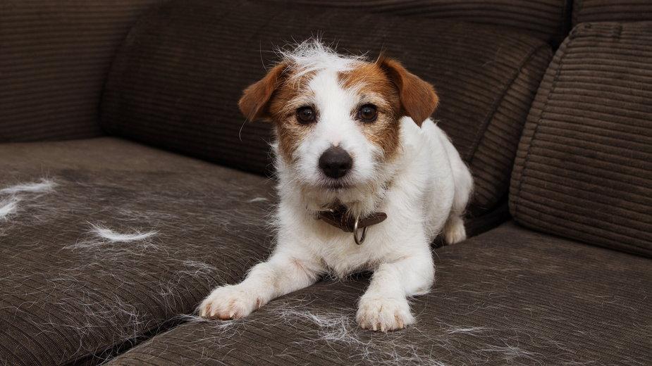 Nie każdy pies posiada podszerstek  - Sandra/stock.adobe.com