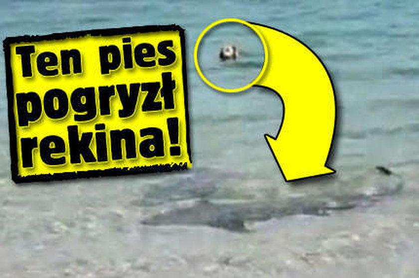 Ten pies pogryzł rekina!