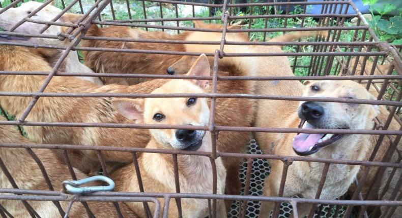 Sonko reveals plans to open dog meat market