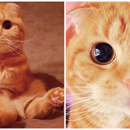 Kot Ze Shreka Istnieje Naprawdę W Tym Spojrzeniu Nie Da Się Nie