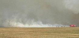 Płonie 200 hektarów trawy! Zagraża budynkom!