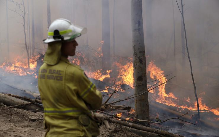 Koale, Australija, požari
