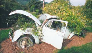 Stare samochody kończą w lesie