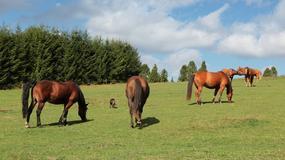 Wakacje dla miłośników jazdy konnej w Bieszczadach i Beskidzie Niskim