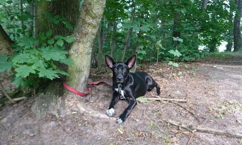 Bezduszny właściciel przywiązał psa w lesie. Uratował go kilkuletni chłopiec