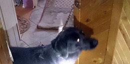 Zostawiła psa uwiązanego do klamki. Oto jej komentarz