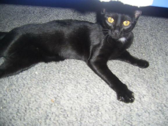 Petrina crna mačka Nađa