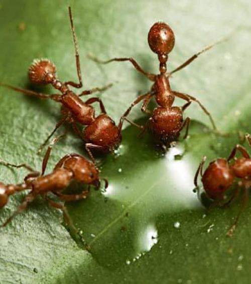 rovarok az emberekben)