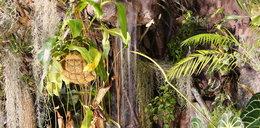 Zobacz dżunglę w środku miasta
