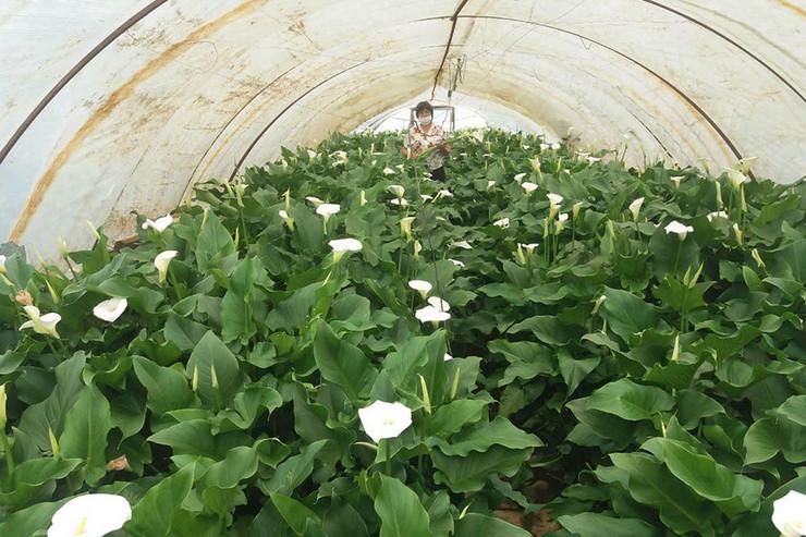 kale-cveće 1