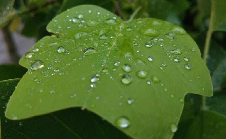 Zdjęcie zrobione aparatem w telefonie HTC U11