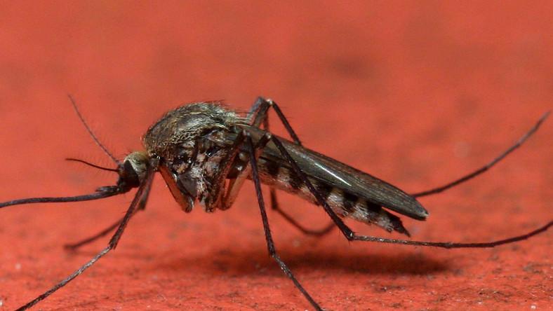 Uwaga. Nadchodzi plaga komarów