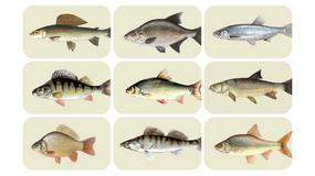 Rozpoznasz wszystkie ryby z gry Na Ryby? Quiz