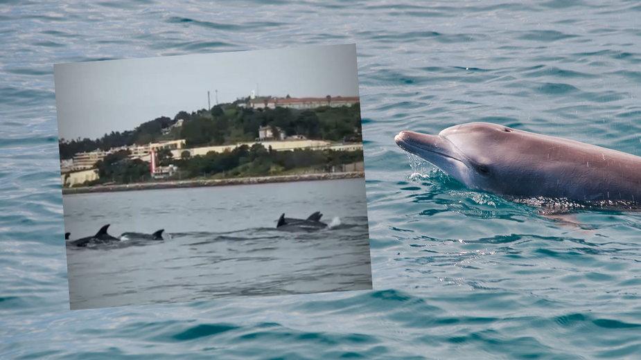 Ponad 50 delfinów przypłynęło do Portugalii