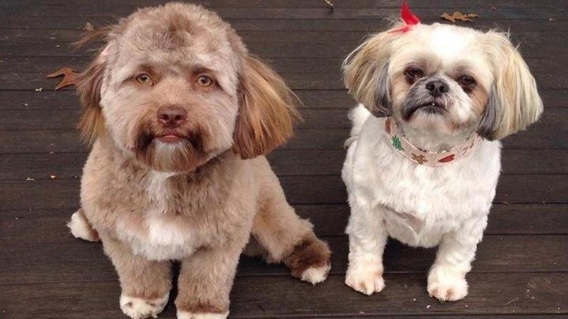 Dieser Hund sieht aus wie ein Mensch
