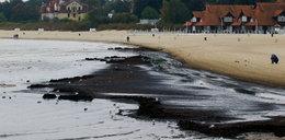 Cuchnące glony na plaży w Sopocie