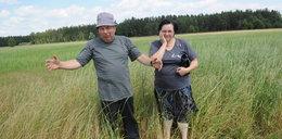 Rolnicy wycięli kilka krzewów, stracą gospodarstwo