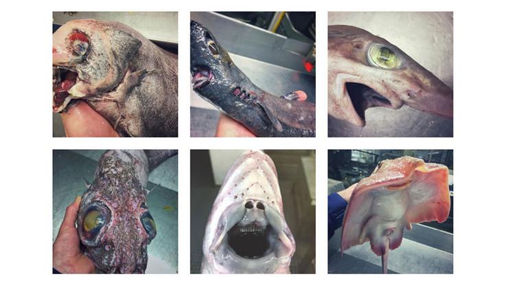 ribe screenshot ostalo instagram rfedortsov_official_account