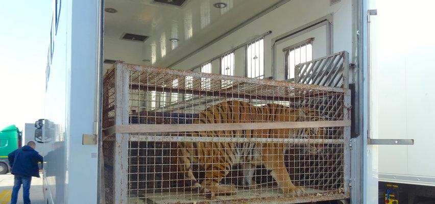 Rząd planuje stworzyć centralny azyl dla zwierząt. O co w nim chodzi?