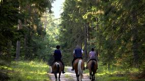Łódzki Szlak Konny: 2000 km długości, ok. 200 ośrodków konnych, 21 miejsc postojowych