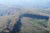 rumunija šuma