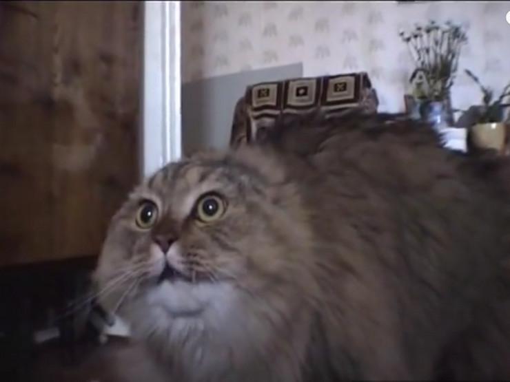 Mačak Markiz