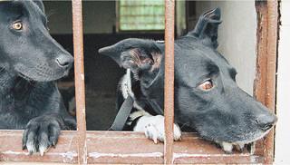Psy i koty lepiej chronione