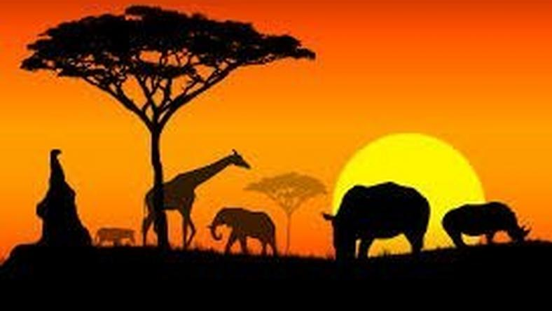 far cry from africa