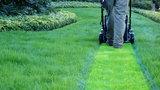 Tani sposób na piękny trawnik