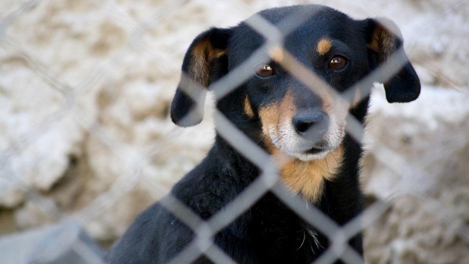 Psy o czarnym umaszczeniu mają duże trudności w znalezieniu domu